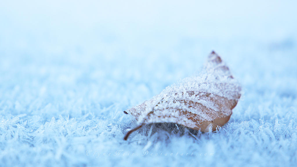 Frozen Leaf by ElyneNoir