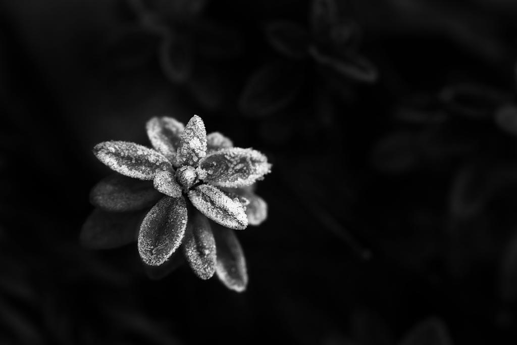 Dark and Cold by ElyneNoir