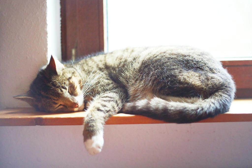 015 - Taking a Nap by ElyneNoir