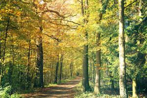 057 - Autumn by ElyneNoir