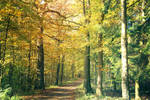 057 - Autumn