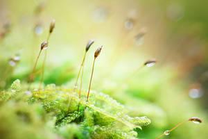 87 - Moss by ElyneNoir