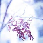 88 - Winter Berries