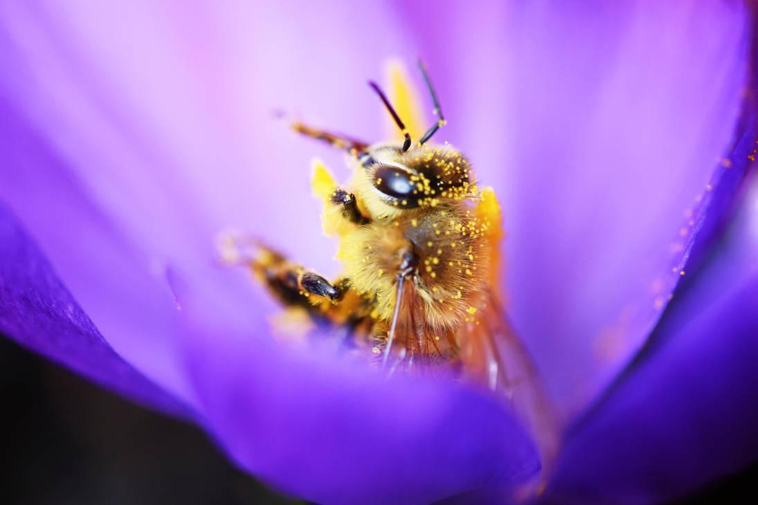 184 - Honey Bee II by ElyneNoir
