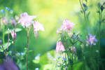 260 - Summer Garden