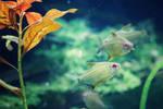 264 - Underwater