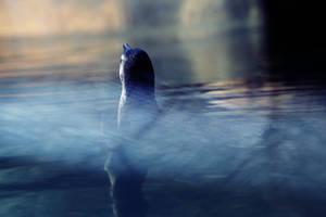 314 - Penguin in the Sunset by ElyneNoir