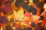 349 - Autumn