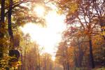 351 - Autumn's Heart