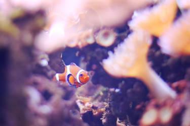 353 - Hiding Nemo by ElyneNoir