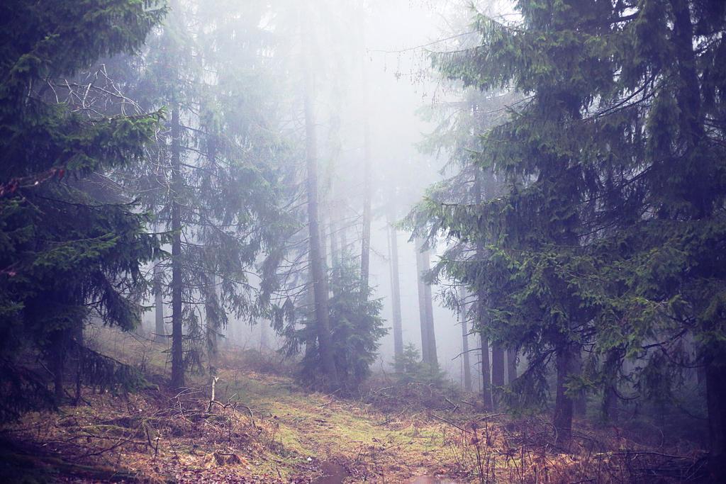 363 - Autumn Mist by ElyneNoir