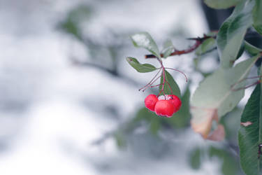 Winterberry by ElyneNoir