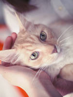 A Happy Cat by ElyneNoir