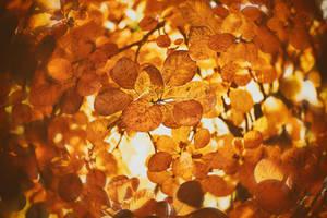 Rusty Leaves by ElyneNoir