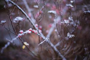 Remnants of Winter
