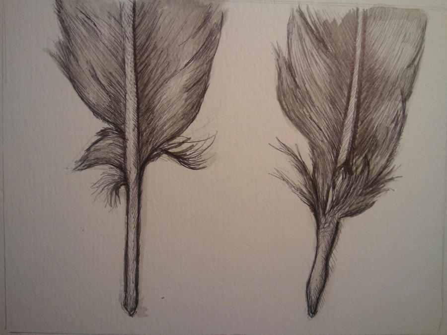 Feather Sketch Tumblr Feather sketch by