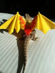 A Dragon for Halloween!
