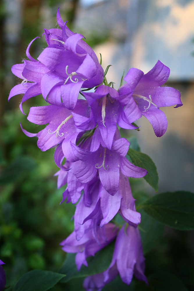 The Purple Cascade by DamaInNero