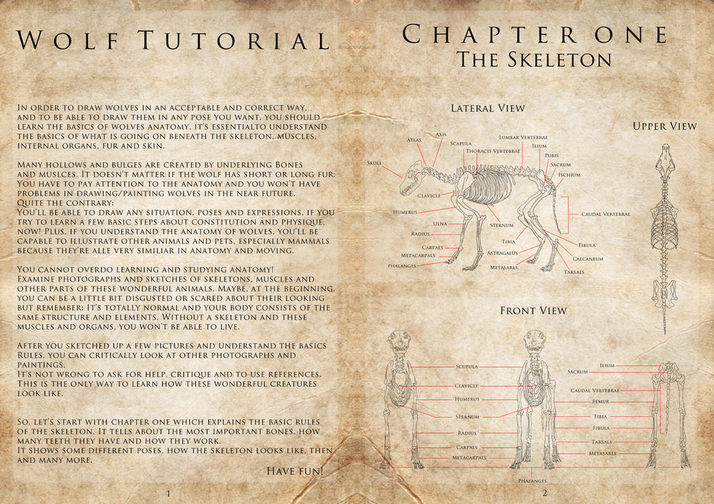 Wolf Tutorial - Page 1 and 2 by ProfelisAurata on DeviantArt