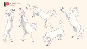 Bucks, broncs, rears