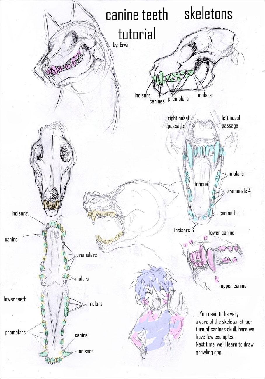 http://fc01.deviantart.com/fs12/f/2006/321/0/0/Canine_Teeth_Tutorial_1_by_erwil.jpg