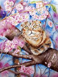 Cat by yushnikova