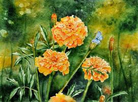 marigold by yushnikova