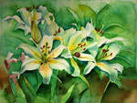 lily by yushnikova