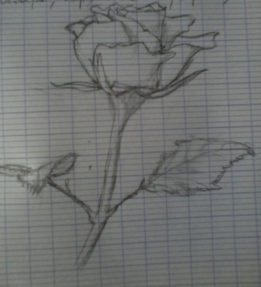 Rose by Elfigre