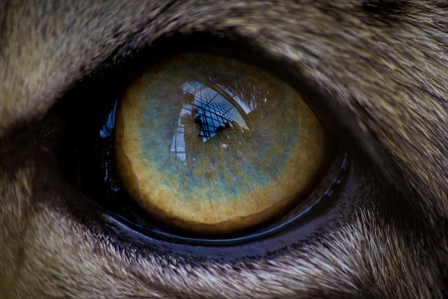 Cats Eye Pi Fort Worth