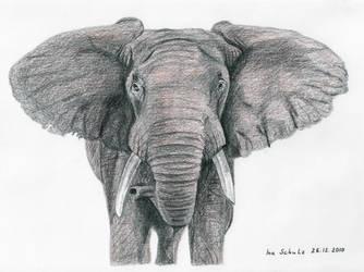 Elephant by shaman-art