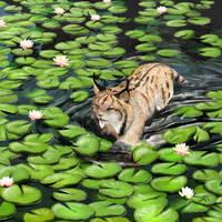 Lynx in Jungle Shallows by Bonjoer