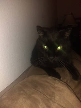 Boo the spooky cat