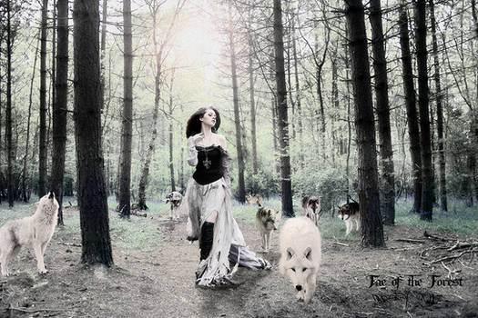 Fae of the Forest Tint