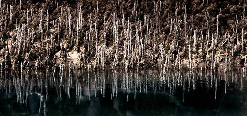 Mangrove by FABULISATION