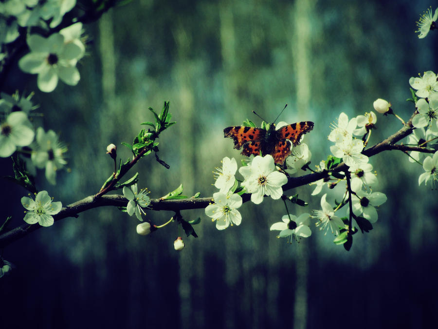 Butterfly sitting on a flowery branch Wallpaper