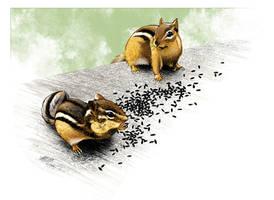 Dinnertime for Chipmunks by PENICKart