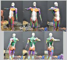 Human superior anatomy color test