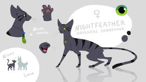 Nightfeather Reference | Current