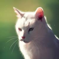 Sunlit cat by Nightfeather123