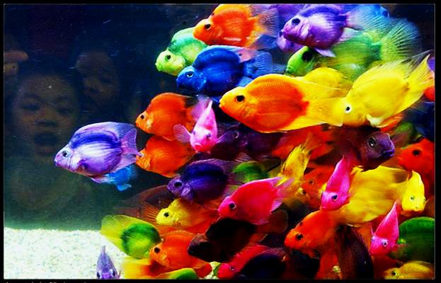 Rainbow Fish by DebbieDimes