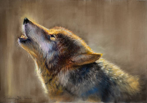 Howling wolf in pastel