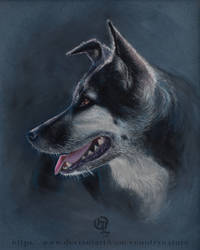 Chara, a dog portrait in pastel by Countrynature