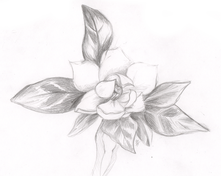 Awesome Easy Flower Drawings