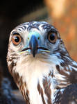 Bird of prey stock 2