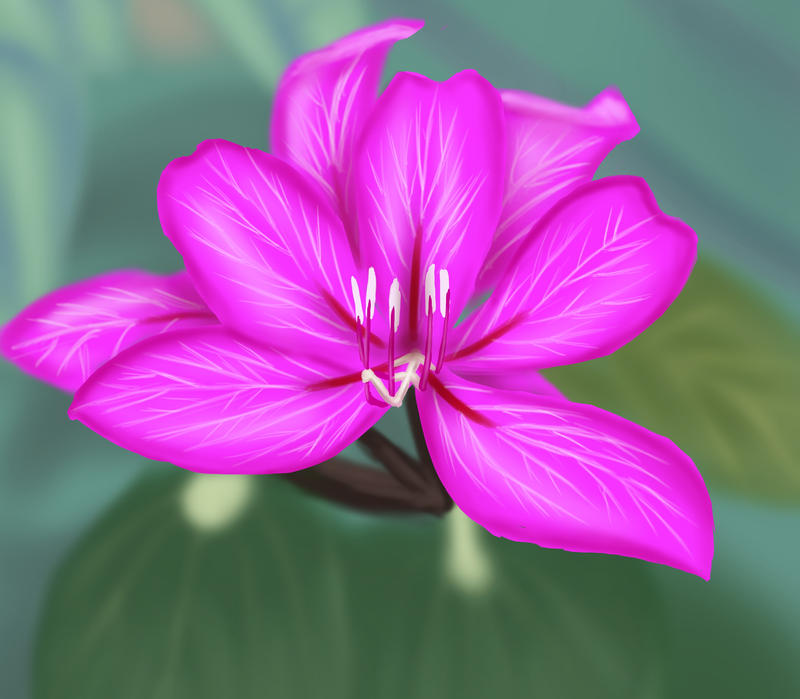 Hong Kong Orchid by Arekage