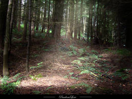 Forest 12 by AnitaJoy-Stock