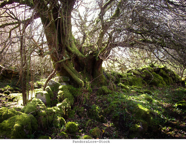 Mossy Tree by AnitaJoy-Stock