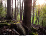 Tree Stump 06