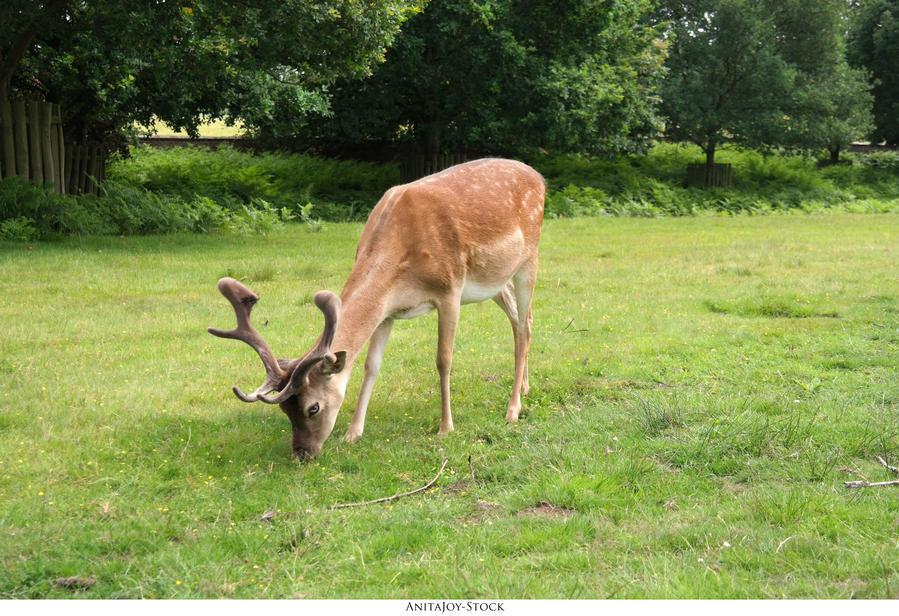 Oh Deer 02 by AnitaJoy-Stock